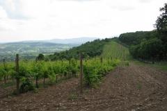 45_-_vinogradi