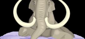 Slon u bari