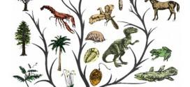 Darvinisti i kreacionisti